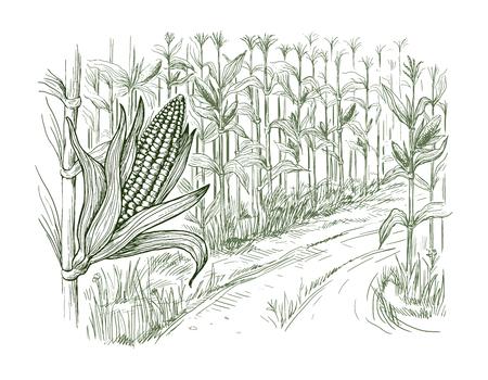 Campo di mais disegnato a mano di schizzo dell'illustrazione di vettore con una strada fra i campi