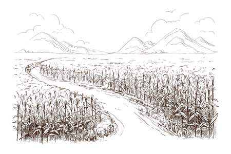 Hand drawn vector illustration sketch cornfield with a road between fields