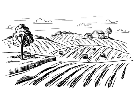 Rural landscape field wheat in graphical style. Hand drawn and converted to vector Illustration. Illustration
