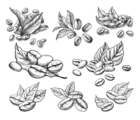 coffee grains and leaves in graphic style hand-drawn vector illustration. Ilustrace