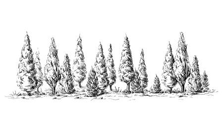 vista panorámica de la selva desde el diseño ilustración vectorial de esbozo cipreses mano. Ilustración de vector