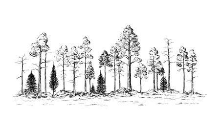 vista panoramica della foresta da diversi alberi disegnata a mano illustrazione vettoriale Disegno di schizzo.