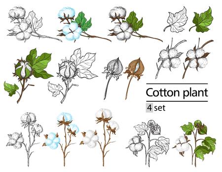 De vectorreeks van hand trekt inkt katoenen installatie en het van letters voorzien. Botanische illustraties.