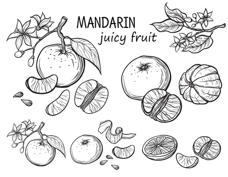 Set of oranges hand drawn sketch food illustration.