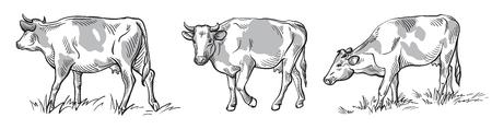 schetsen van koeien die met de hand zijn getekend. vee. vee. dieren weiden