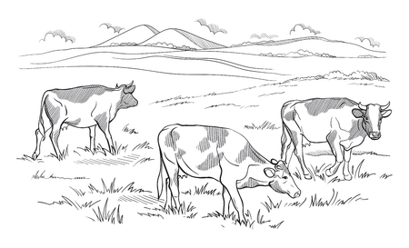 Cows grazing on meadow Hand drawn vector illustration sketch