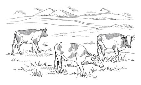 Koeien weiden op weide Hand getekende vectorillustratie schets Stock Illustratie