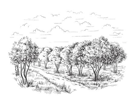 오렌지 - 오렌지 트리 오렌지 공원 벡터 일러스트 스케치 드로잉 일러스트