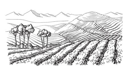Coffee plantation landscape in graphic style hand-drawn vector illustration. Vettoriali