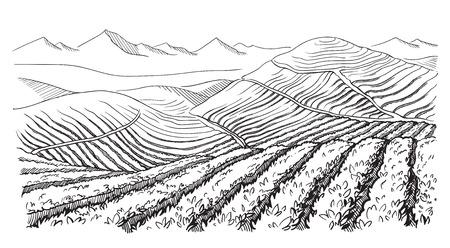 그래픽 스타일 손으로 그린 벡터 일러스트 레이 션에 커피 농장 풍경. 일러스트