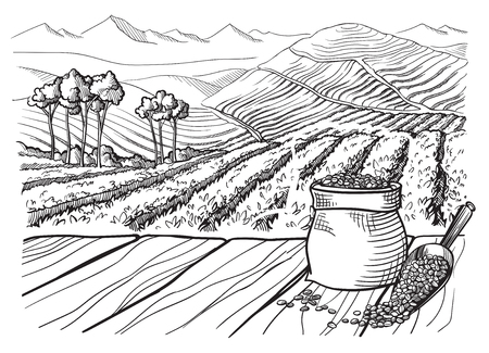 coffee plantation landscape table cup sack in graphic style hand-drawn vector illustration.