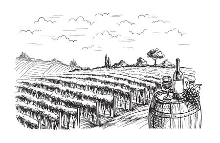 Righe di piante di uva da vigneto in stile grafico, illustrazione vettoriale a mano disegnata.