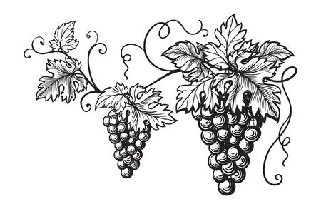 Conjunto de uvas monocromo bosquejo. Mano, dibujado, uva, racimos Foto de archivo - 78444425