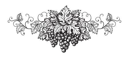 Set of grapes monochrome sketch. Hand drawn grape bunches. Vettoriali