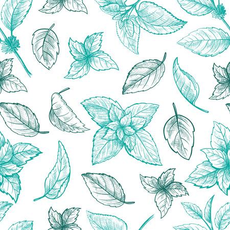 Munt hand schets vector illustratie naadloze textuur. Pepermunt gegraveerde tekening van mentholbladeren die op witte achtergrond worden geïsoleerd. Blad kruiden groene munt plant