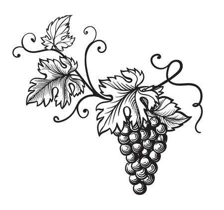 Set van druiven zwart-wit schets. Handgetekende druivenbunches. Stockfoto