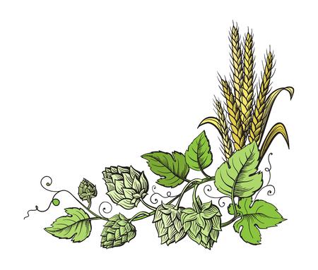Oddział pszenica i chmiel piwny z kłosami pszenicy, liśćmi i szyszkami chmielowymi. Szkicowanie i grawerowanie kątowej ramy rośliny. Cały element izolowany.