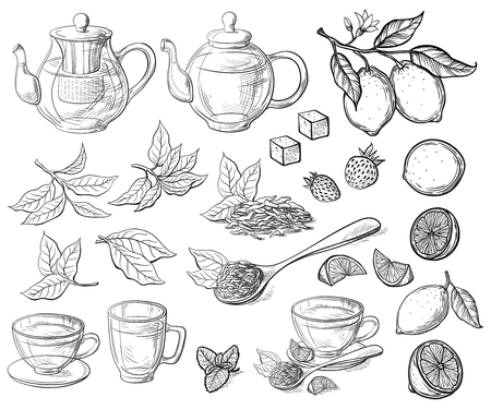 Collection of tea leaves hand drawn vector illustration
