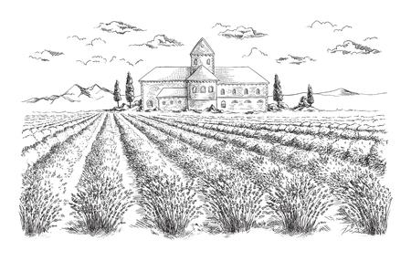 Valensole.Provence,France 近くの木とラベンダー畑夏の日没の風景  イラスト・ベクター素材