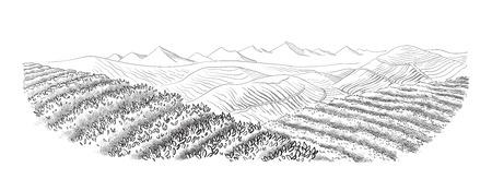 Tea plantation landscape in graphic style, hand-drawn vector illustration.