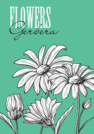 winter garden: Hand drawn flower set gerbera illustration.