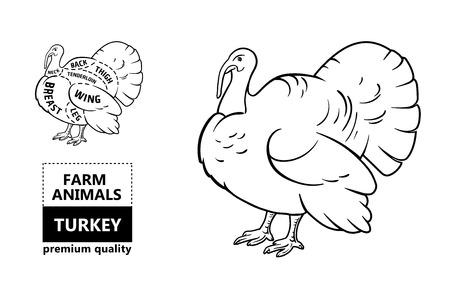 Turkey Head Diagram Collection Of Wiring Diagram