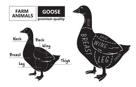 Cut of meat set. Poster Butcher diagram, scheme - Goose. 矢量图像