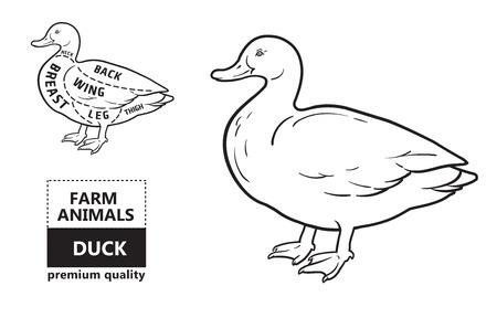 Typographic duck butcher cuts diagram scheme. Premium guide meat label 矢量图像