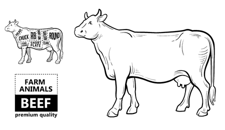 99065345 beef meat part sets for poster butcher diagram on silhouette black with white background illustratio?ver=6 beef meat part sets for poster butcher diagram on silhouette