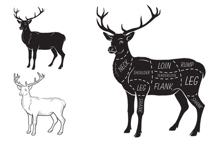 Deer meat cuts with elements and names. Illustration