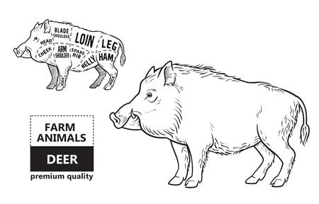 Wild hog, boar game meat cut diagram scheme Vettoriali