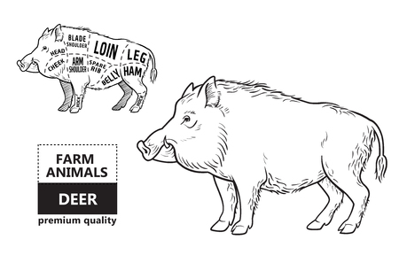 Wild hog, boar game meat cut diagram scheme Illustration