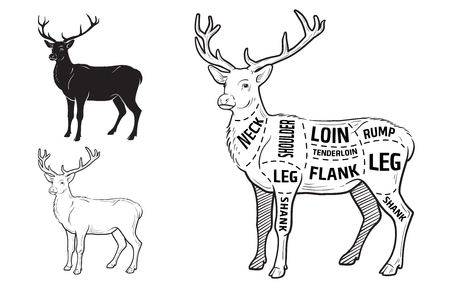 Deer meat cuts with elements and names.  イラスト・ベクター素材