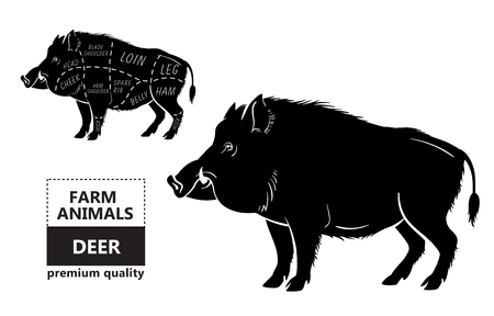 Wild hog, boar game meat cut diagram scheme Vectores