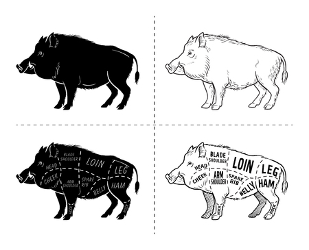 Wild hog, boar game meat cut diagram scheme - elements set on chalkboard. Vector illustration. Stock Illustratie