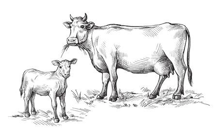 croquis de vaches et de veaux dessinés à la main. bétail bétail animaux pâturage illustration vectorielle