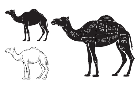 Cut of camel set. Poster Butcher diagram - desert-ship. Vintage typographic hand-drawn. Vector illustration
