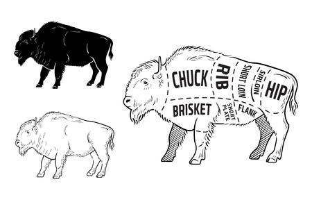 Set di taglio di bisonte. Diagramma del macellaio di poster - Bisonte. Disegnati a mano tipografici vintage. Vettoriali