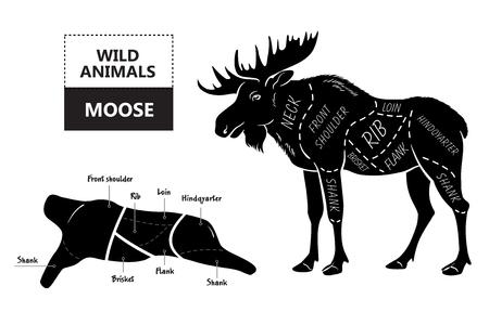 Cut of elk set. Poster Butcher diagram - desert-ship. Vintage typographic hand-drawn.