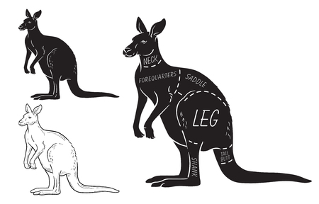 Cut of kangaroo set. Poster Butcher diagram - desert-ship. Vintage typographic hand-drawn.