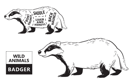 Cut of badger set. Poster Butcher diagram - desert-ship. Vintage typographic hand-drawn. Vector illustration