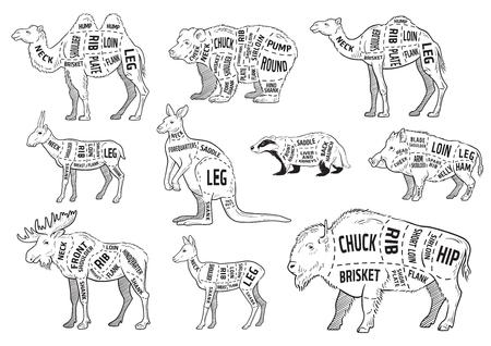 Taglio del set di animali. Diagramma del macellaio di poster - animale selvatico. Disegnati a mano tipografici vintage. Illustrazione vettoriale