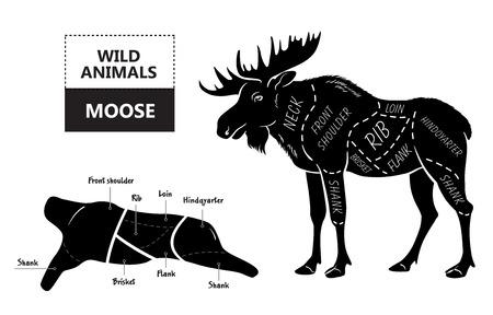 Knippen van elanden set. Poster Slager diagram - woestijn-schip. Vintage typografische handgetekende. Vector illustratie