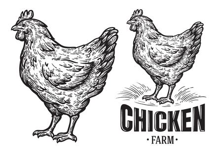 Emblema de la granja de pollos sobre fondo blanco .. Ilustración vectorial