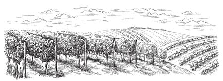 vine plantation hills, trees, clouds on the horizon vector illustration 일러스트