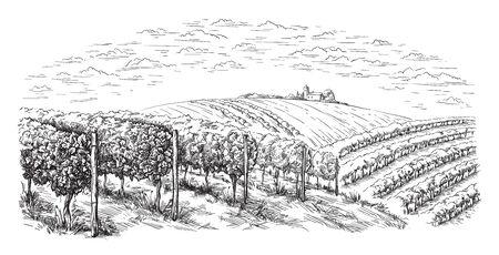 colline di piantagioni di vite, alberi, nuvole all'orizzonte illustrazione vettoriale