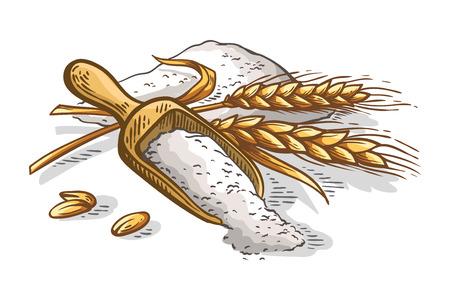 colorfull wooden scoop of fresh ears of wheat flour on white background vector illustration Illustration