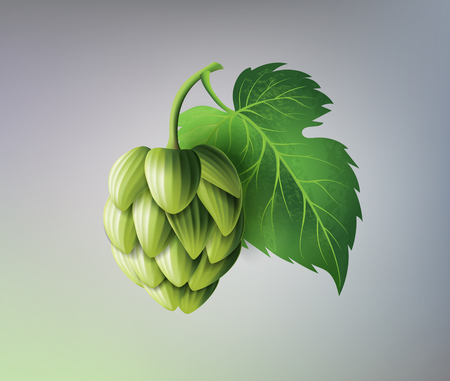 vector realistic beer green hop cones, leaves with stem. Isolated illustration on a color background. Popular alcohol drink, brewery industry floral symbol