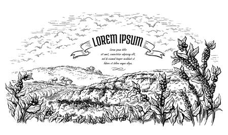Kaffeeplantagenlandschaft im grafischen Stil handgezeichnete Vektorillustration.