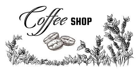 coffee plantation landscape and coffee bean macro in graphic style hand-drawn vector illustration. Ilustrace